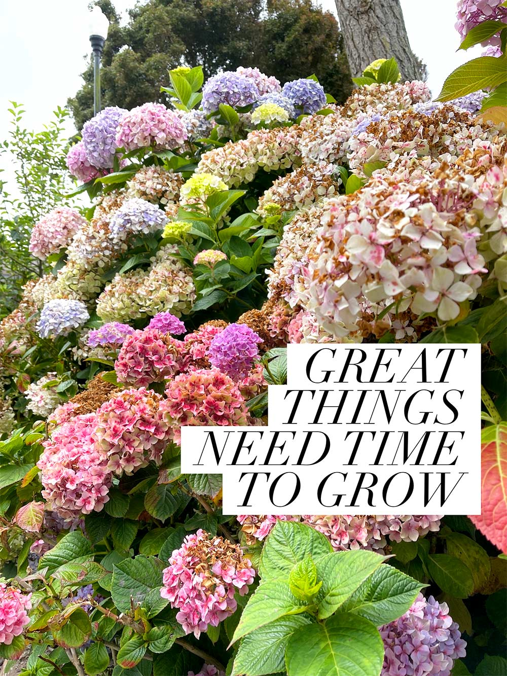 great things need time to grow monday poll