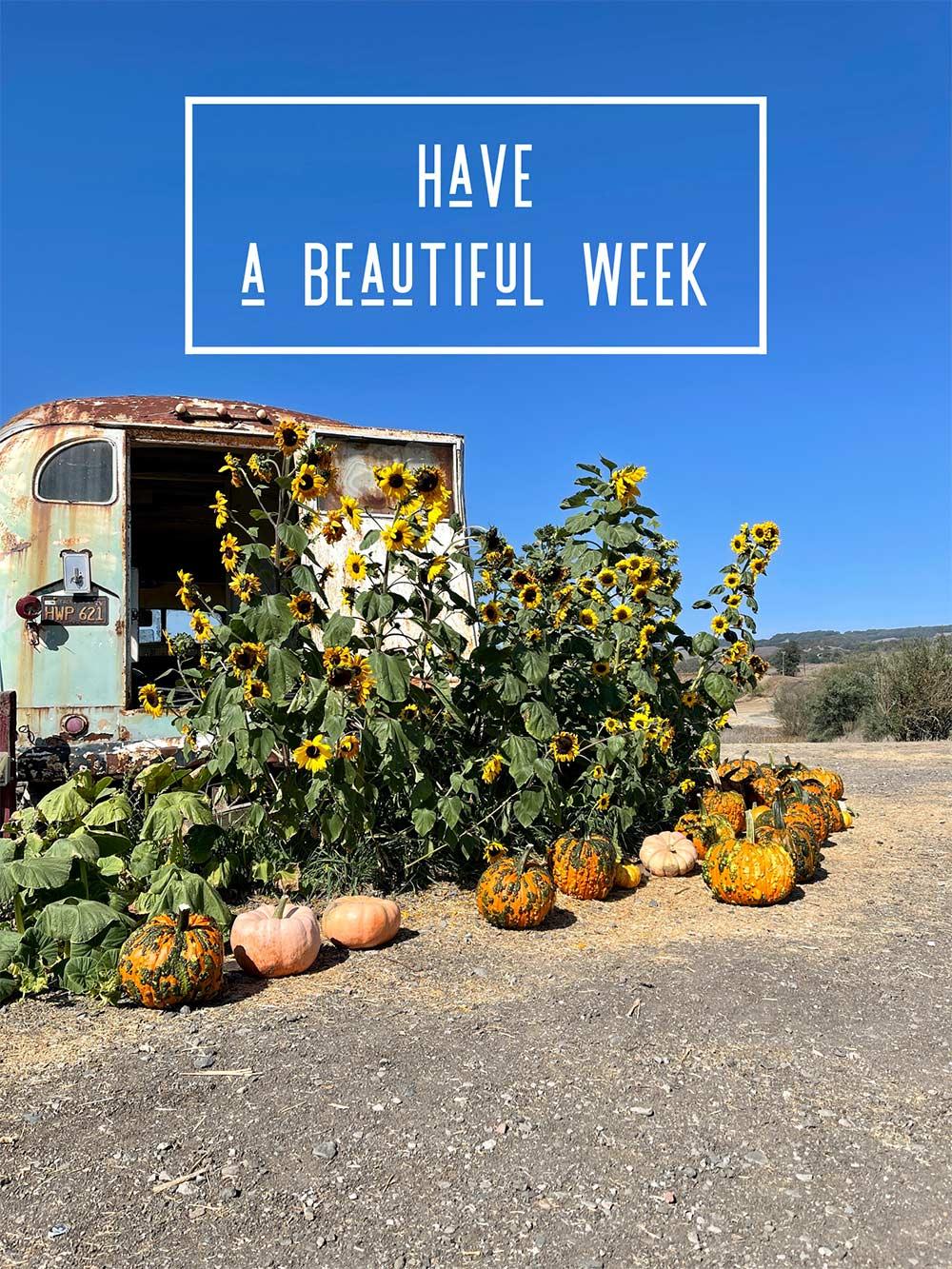 have a beautiful week fall pumpkins sunflowers bus